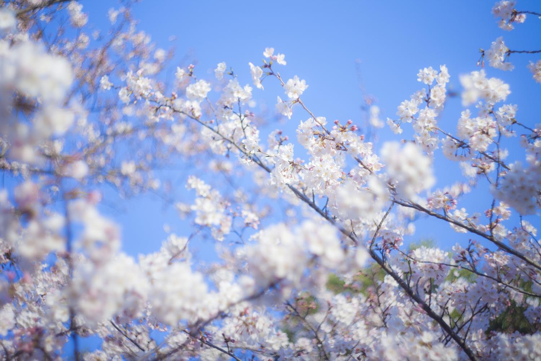 新年度に向けて、春休みにすべきこと